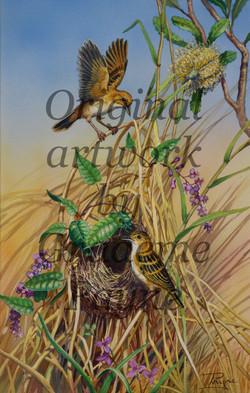 Golden Headed Cisticola