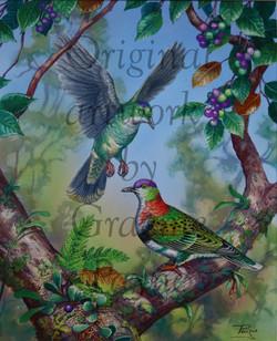 'Superb Fruit-Doves'