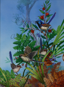 'Variegated Fairy-wrens' - SOLD