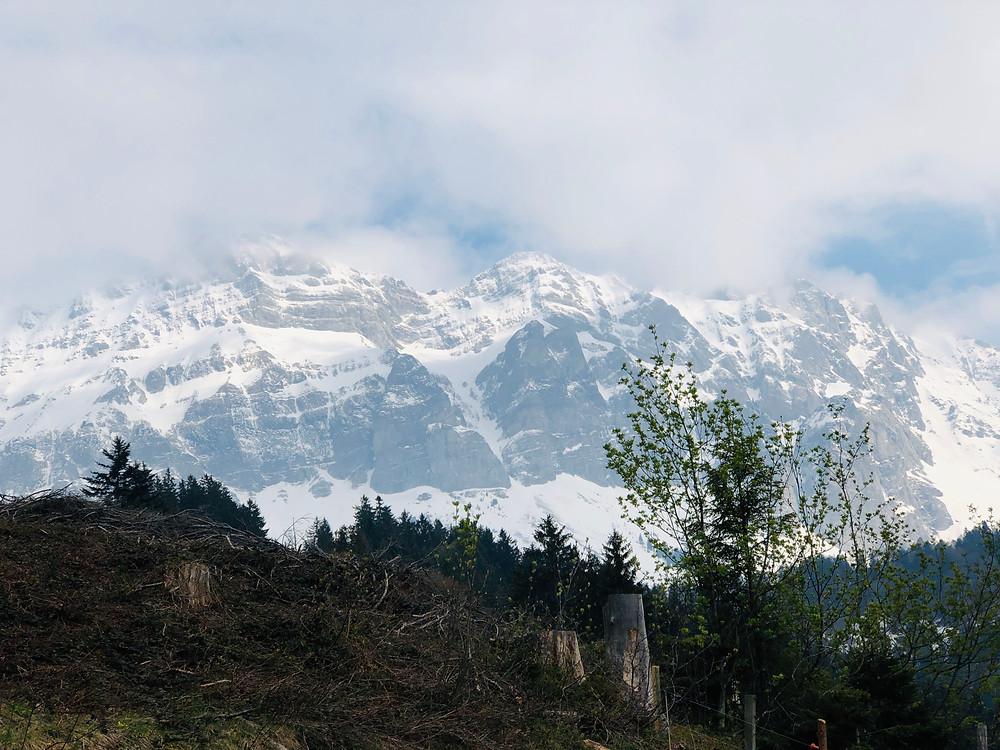 Blick auf das Alpsteingebirge