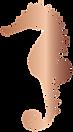 seahorse cut flip.png