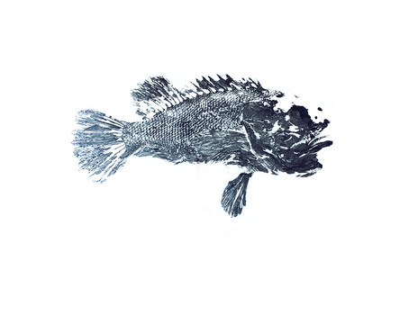 """Scorpion Fish"""