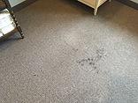 Dirty soiled carpet before