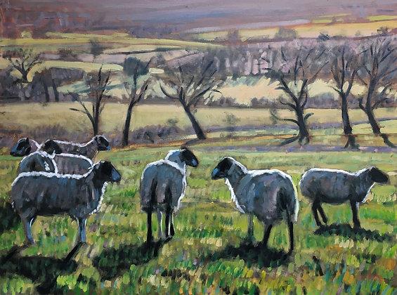 Poynings Grange Sheep