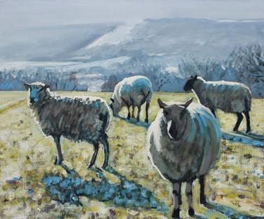 Sheep on frosty morning