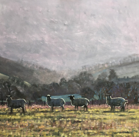 Four sheep in Poynings