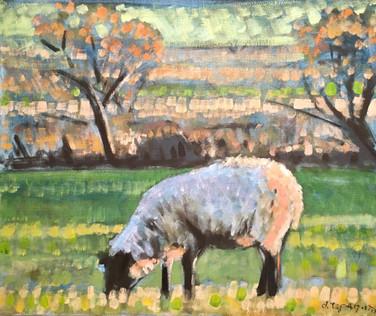 Autumn sheep