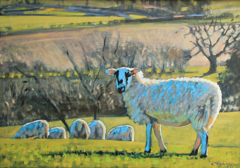 sheep by James Lightfoot