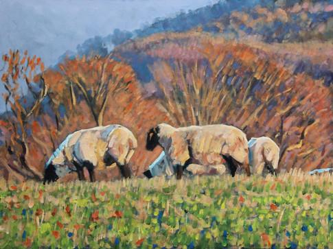 Autumn sheep No2