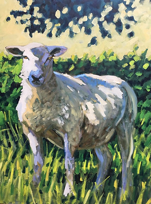 Shaded lamb