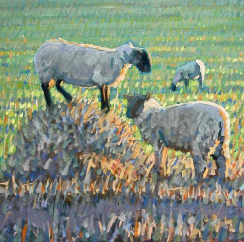 Evening sheep on straw No1