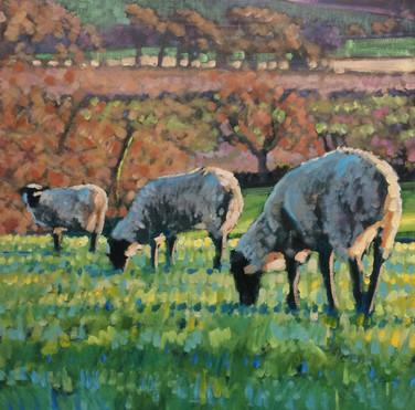 Autumn sheep No4