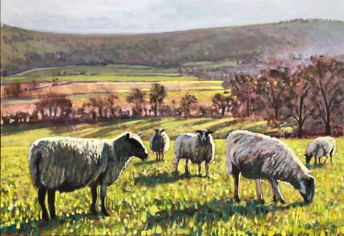 Sheep commission