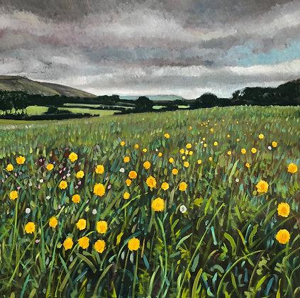 Meadow, Poynings