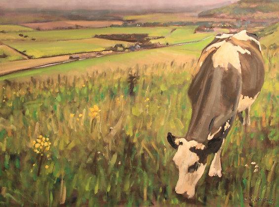 Cow above Wickhurst Barns