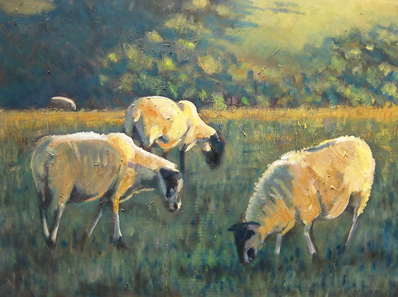 Sheep in Autumn light