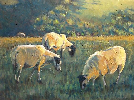 Sheep in Autumn light
