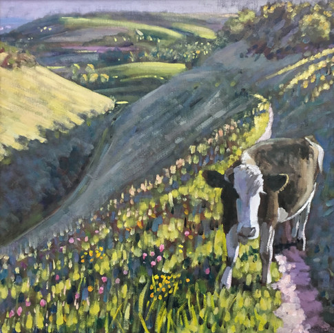 Cow in Devil's Dyke