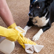 cleaning-pet-stain-carpet.jpg