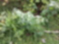Week 2 & 3 Garden Task Grade 6 (6 May 20