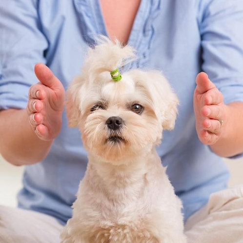 Reiki Animals: Client's Home: 5 Sessions