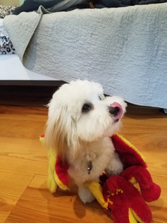 Dog of the Week 11/5: Lilo!