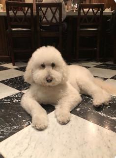 Dog of the Week 1/28: Bailey!