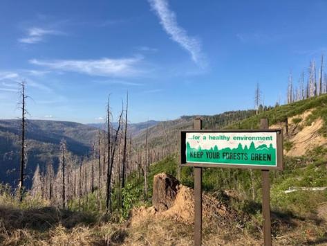 Snag Dynamics in Sierra Nevada Mixed-Conifer