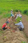 Linha de árvore - Fazenda Malabar
