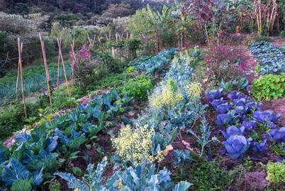 Horta agroflorestal - Fazenda Serrinha