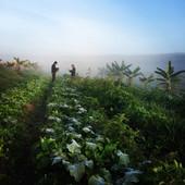 Horta - SAF - Fazenda Malabar