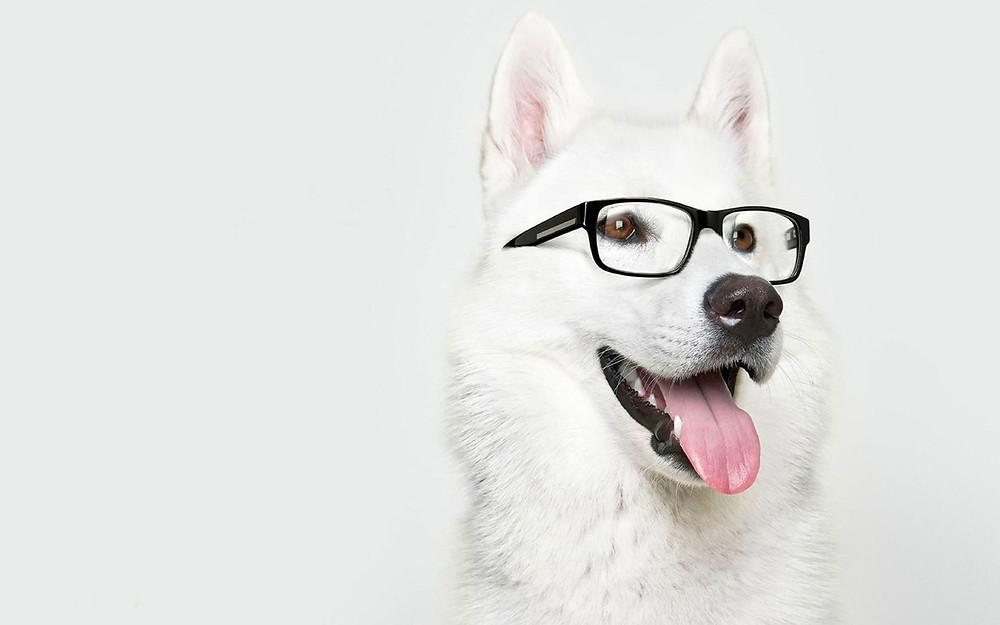 Dog-With-Glasses.jpeg