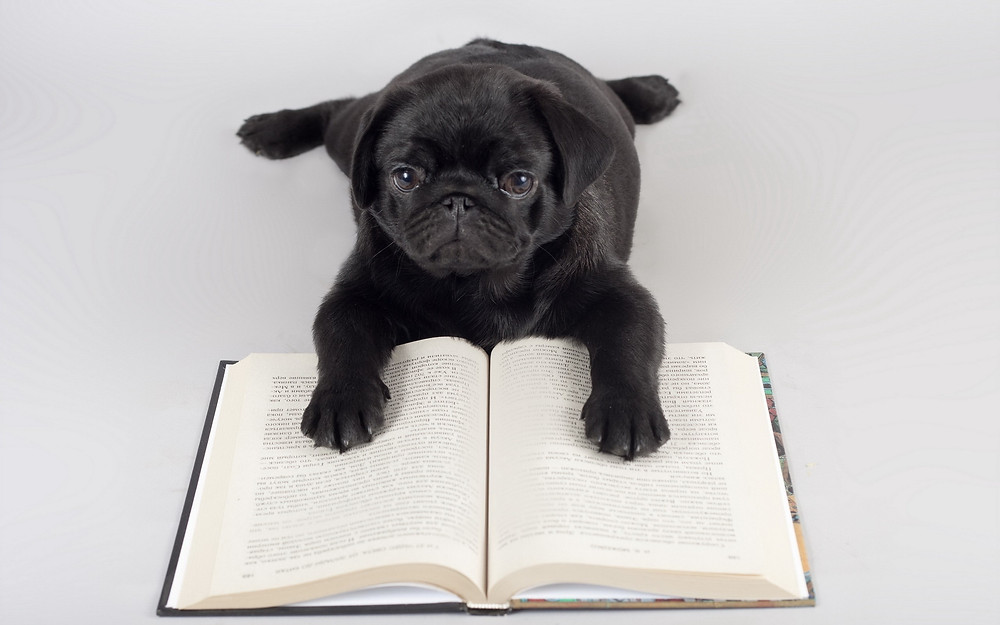 Animals___Dogs_The_dog_learns_to_read_041951_.jpg