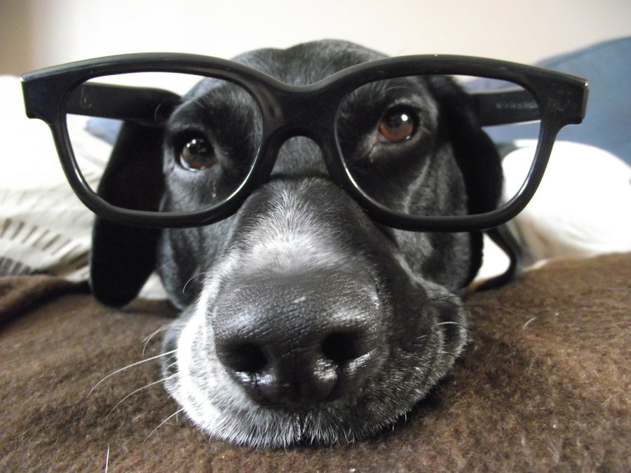 dog_with_glasses_by_danihee-d53949b.jpg