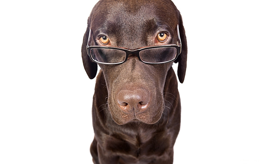 Dog-With-Glasses.jpg