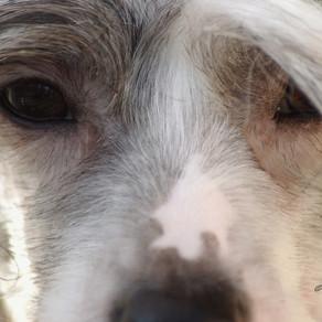 Close up koiran kirsuun