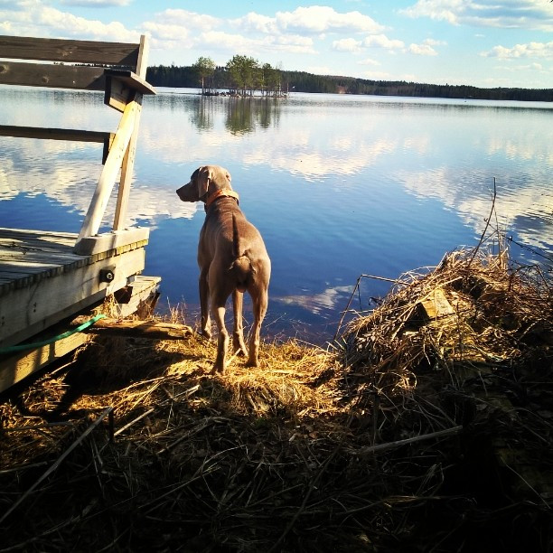 #travelling #Finland #multia #sinervä #s