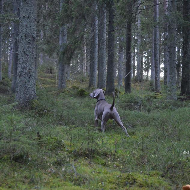 Hallin metsässä.jpg