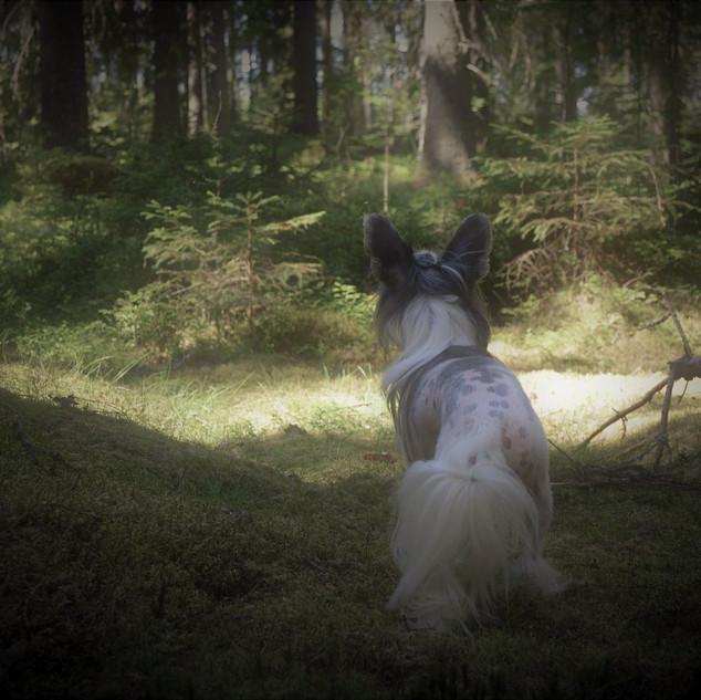 Multian metsässä