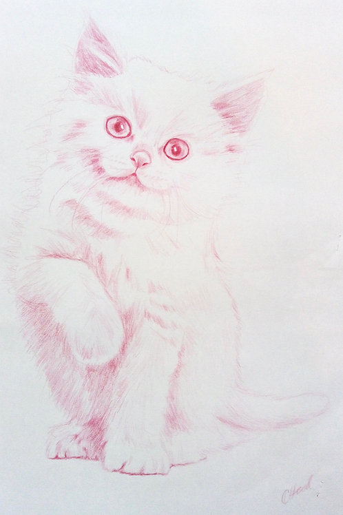 Pink Kitten with Raised Paw