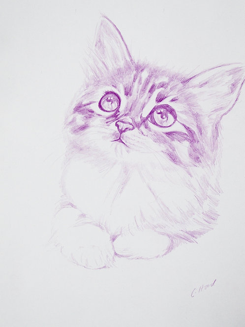 Purple Kitten With Folded Paws