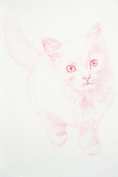 Pink Cat Walking
