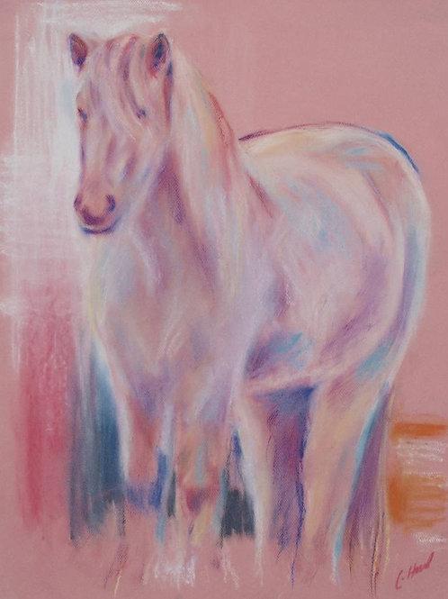 Pale Pink Icelandic Horse