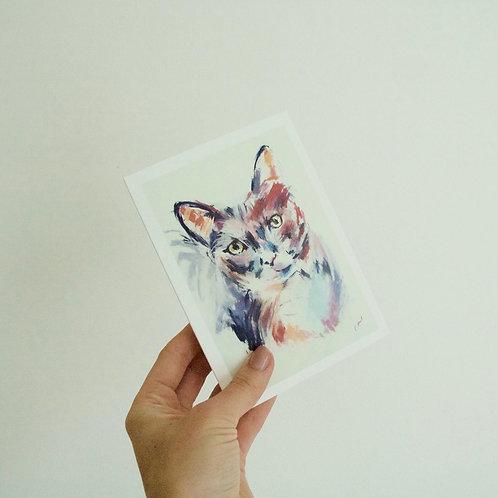 Multicoloured Cat
