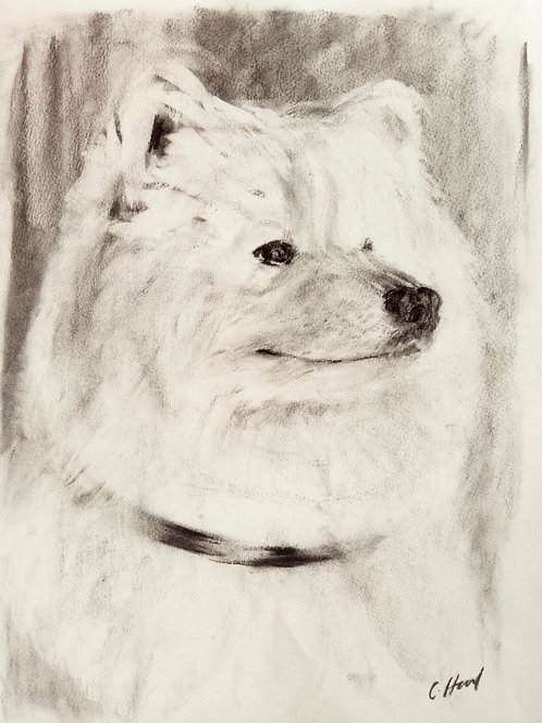 Charcoal Samoyed