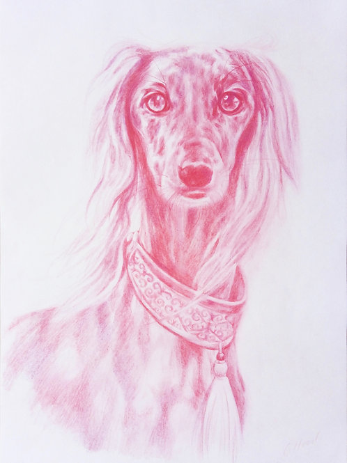 Pink Saluki with Collar
