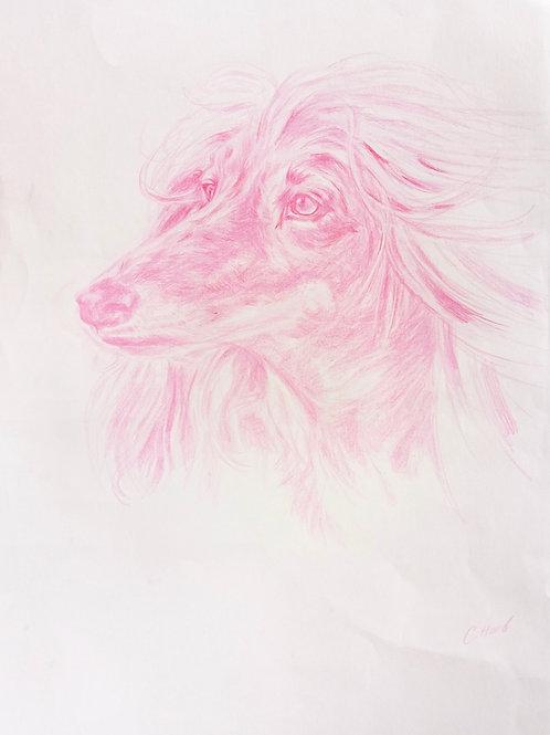 Pink Afghan Hound