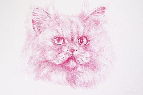 Pink Persian