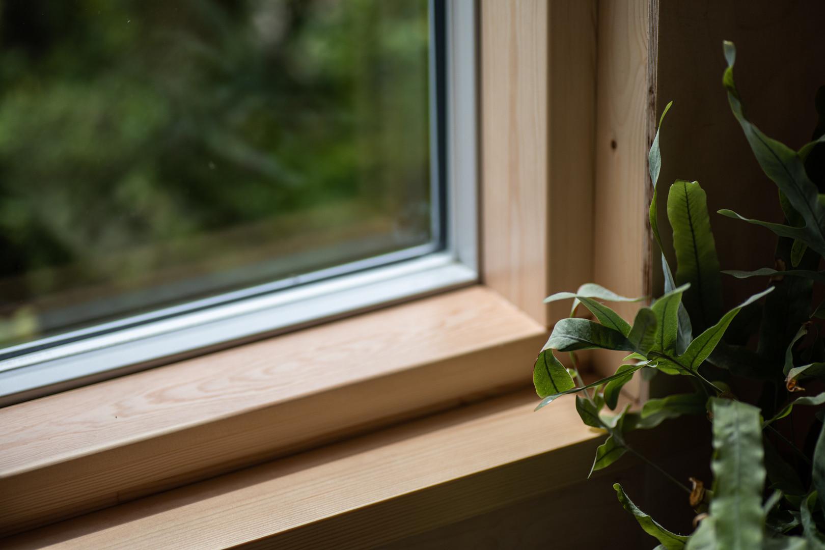 Plant sitting next to window