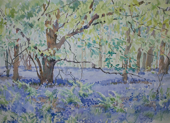 Bluebell Wood (small)